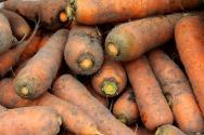 carrot-3784444_960_720